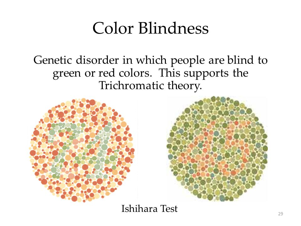 29 Color Blindness Ishihara Test Genetic disorder in which people are blind to green or red colors. This supports the Trichromatic theory.