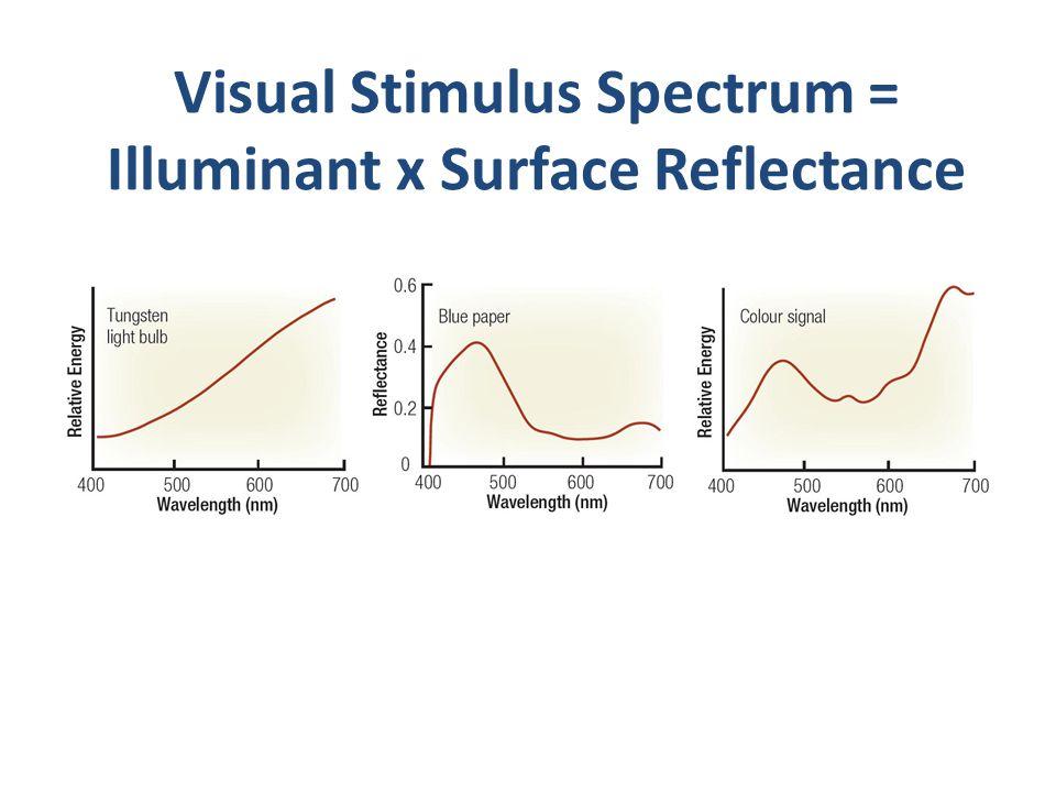 Visual Stimulus Spectrum = Illuminant x Surface Reflectance