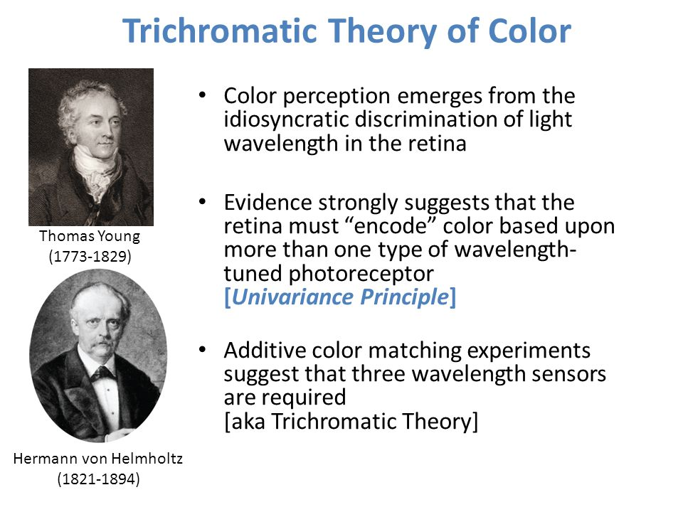 Trichromatic Theory of Color Thomas Young (1773-1829) Hermann von Helmholtz (1821-1894) Color perception emerges from the idiosyncratic discrimination