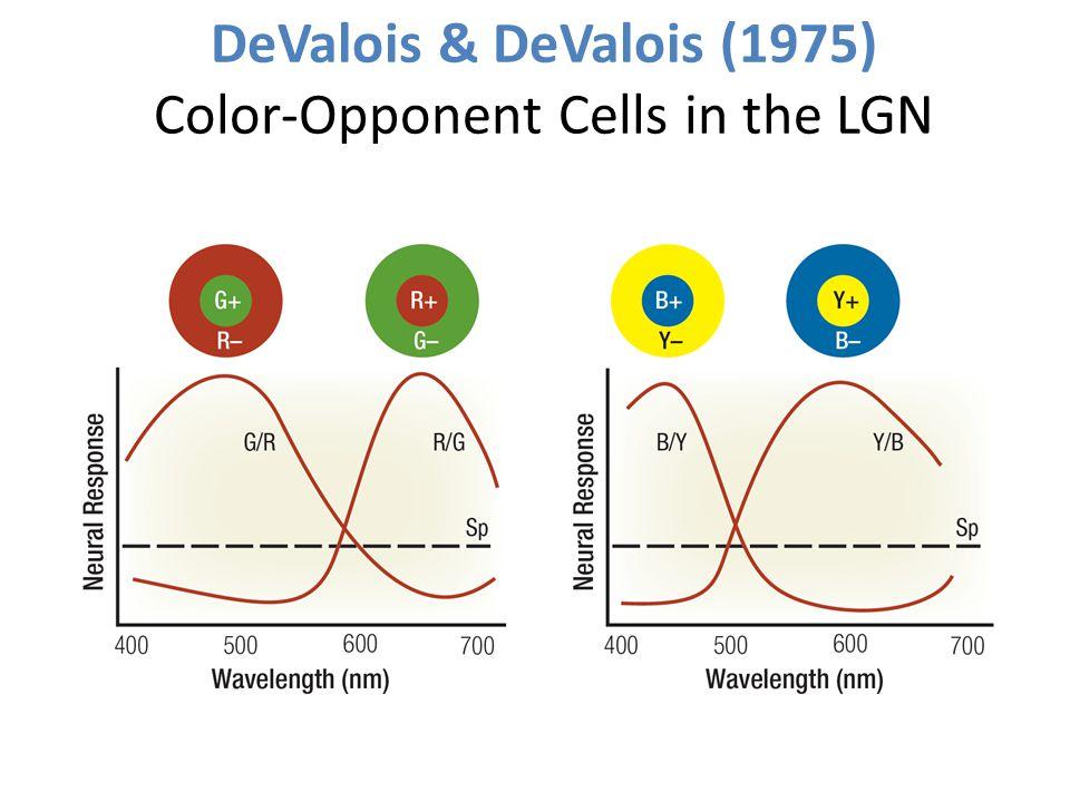 DeValois & DeValois (1975) Color-Opponent Cells in the LGN