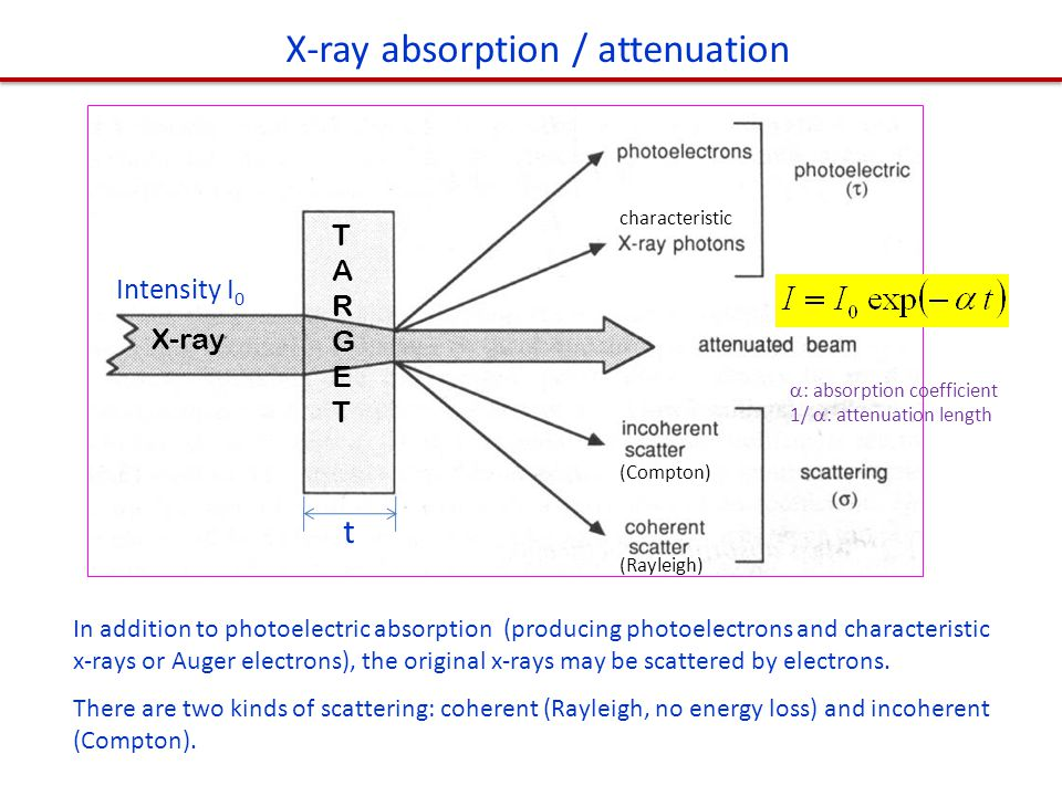 In addition to photoelectric absorption (producing photoelectrons and characteristic x-rays or Auger electrons), the original x-rays may be scattered