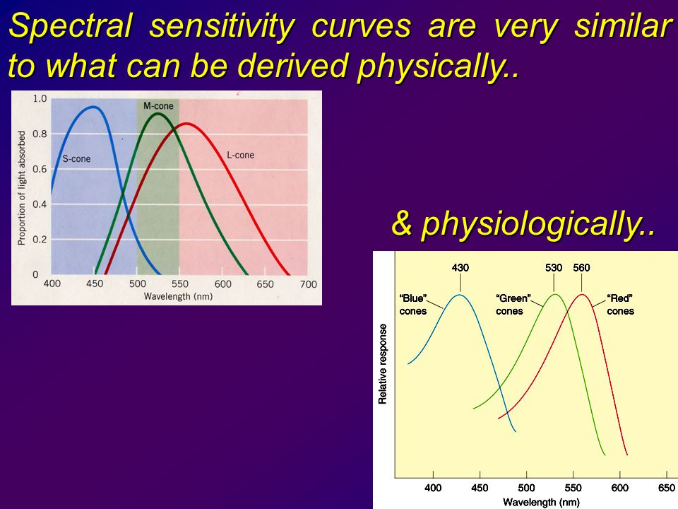 Spectral sensitivity curves are very similar to what can be derived physically..