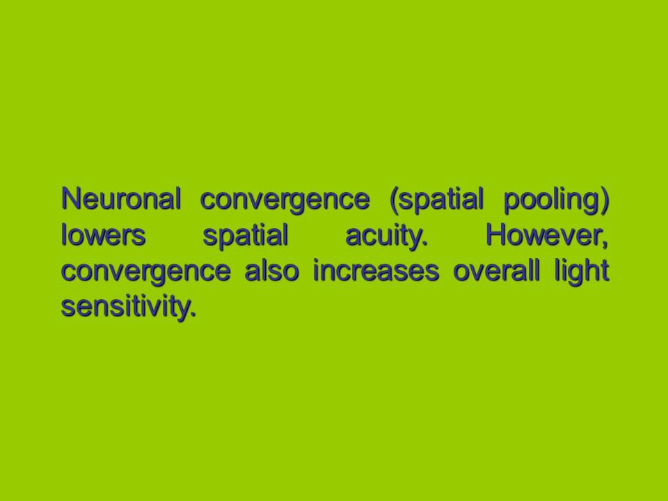 Neuronal convergence (spatial pooling) lowers spatial acuity.