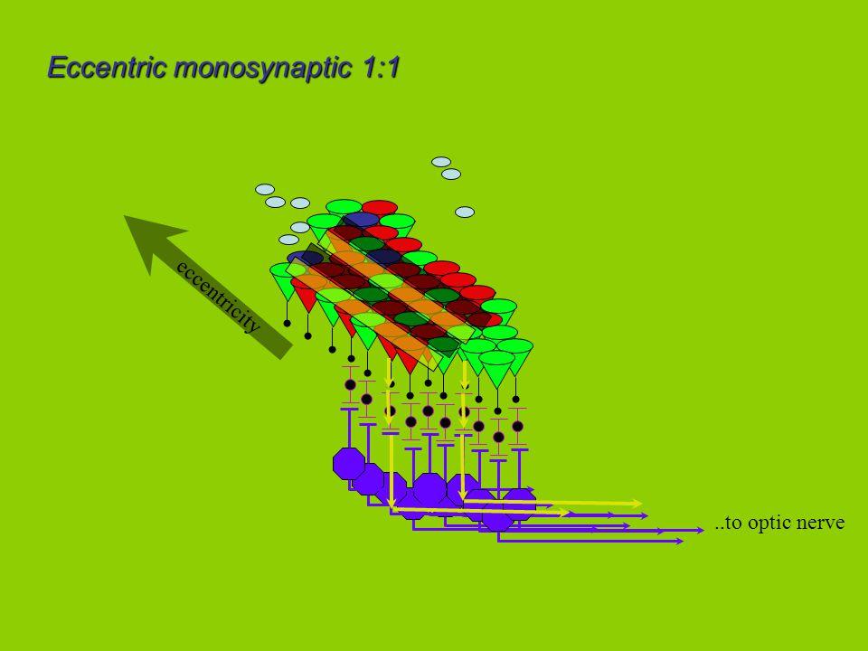 ..to optic nerve eccentricity Eccentric monosynaptic 1:1