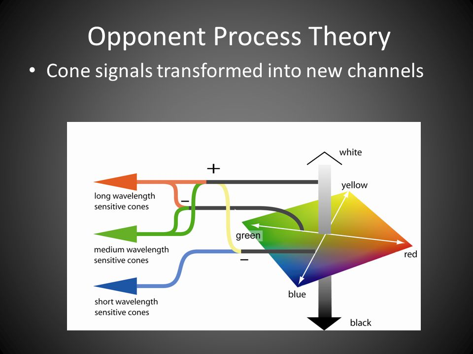 Opponent Process Theory Cone signals transformed into new channels