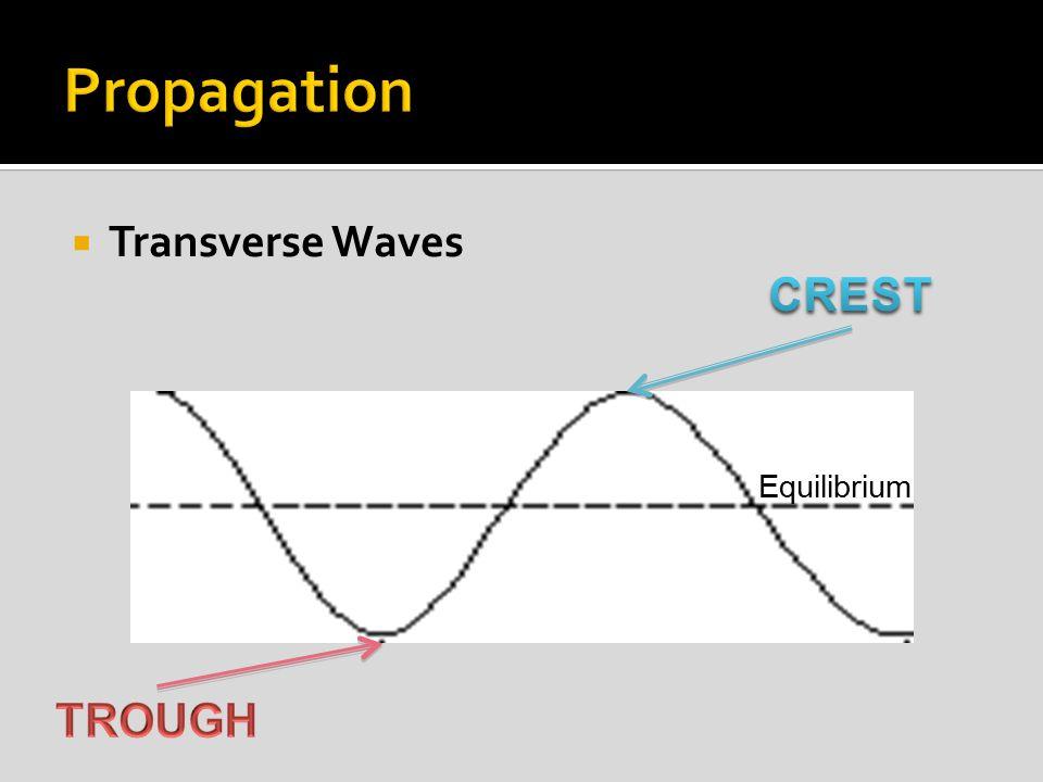  Transverse Waves Equilibrium
