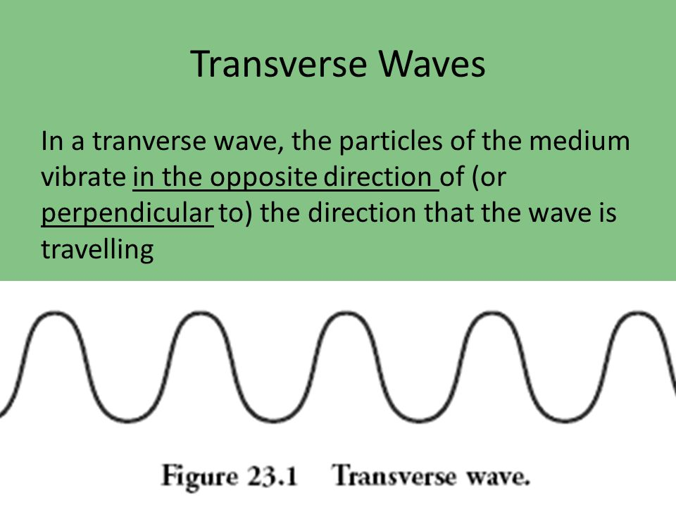 Transverse Waves In a tranverse wave, the particles of the medium vibrate in the opposite direction of (or perpendicular to) the direction that the wa
