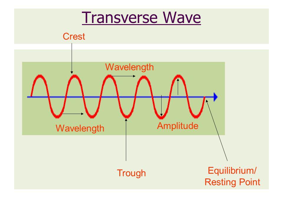 Transverse Wave Crest Trough Equilibrium/ Resting Point Wavelength Amplitude