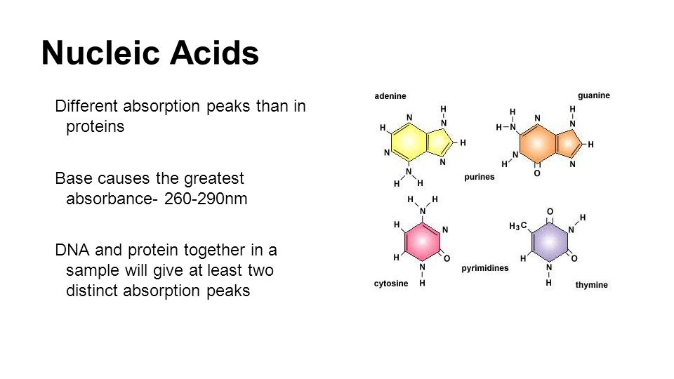 Nucleic Acids Different absorption peaks than in proteins Base causes the greatest absorbance- 260-290nm DNA and protein together in a sample will give at least two distinct absorption peaks