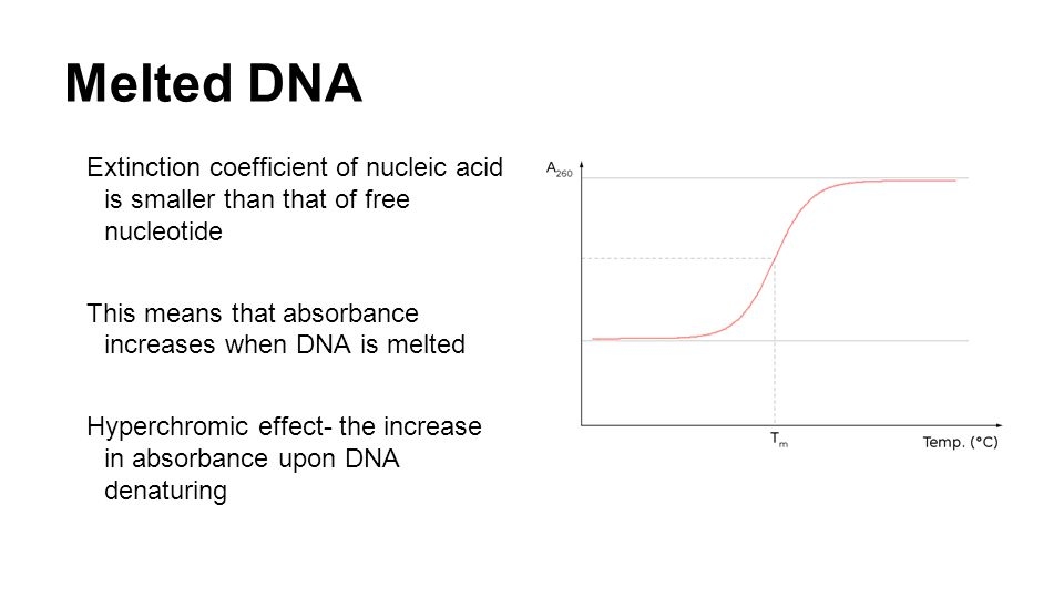 Melted DNA Extinction coefficient of nucleic acid is smaller than that of free nucleotide This means that absorbance increases when DNA is melted Hyperchromic effect- the increase in absorbance upon DNA denaturing