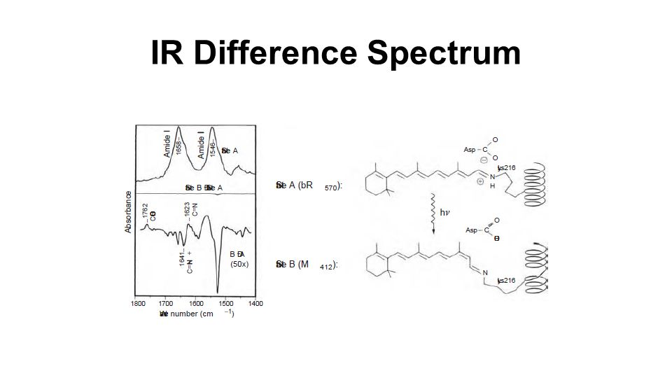 IR Difference Spectrum