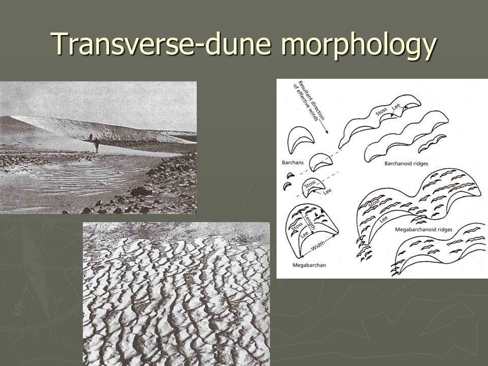 Transverse-dune morphology