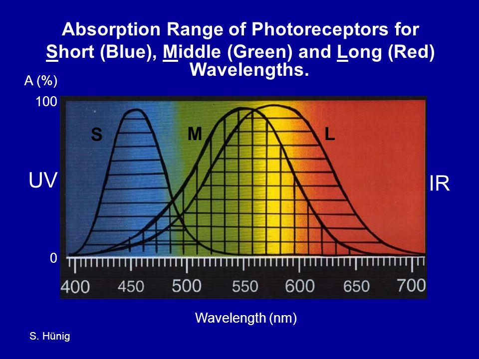 S.Hünig UV IR T (%) 100 0 Wavelength (nm) Short (Blue) Wavelength Photoreceptor.