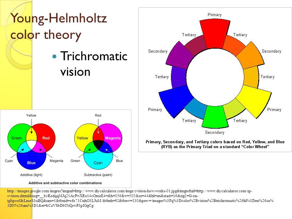 Young-Helmholtz color theory Trichromatic vision http://images.google.com/imgres imgurl=http://www.diycalculator.com/imgs/cvision-how-works-01.jpg&imgrefurl=http://www.diycalculator.com/sp- cvision.shtml&usg=__bcKsdqqMJq21AcPwXRe14cOmeE4=&h=356&w=505&sz=44&hl=en&start=16&sig2=G-xn- igItpoeGkLmeS3uBQ&um=1&tbnid=ofx71CnhO3LJuM:&tbnh=92&tbnw=130&prev=/images%3Fq%3Dcolor%2Bvision%2Btrichromatic%26hl%3Den%26sa% 3DN%26um%3D1&ei=bCzVSbD9J5iQswP3pIGgCg