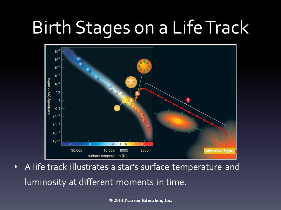 Birth Stages on a Life Track A life track illustrates a star's surface temperature and luminosity at different moments in time. © 2014 Pearson Educati