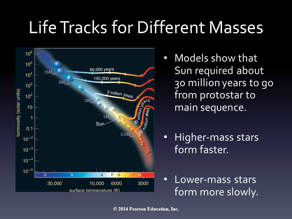 Life Tracks for Different Masses Models show that Sun required about 30 million years to go from protostar to main sequence. Higher-mass stars form fa