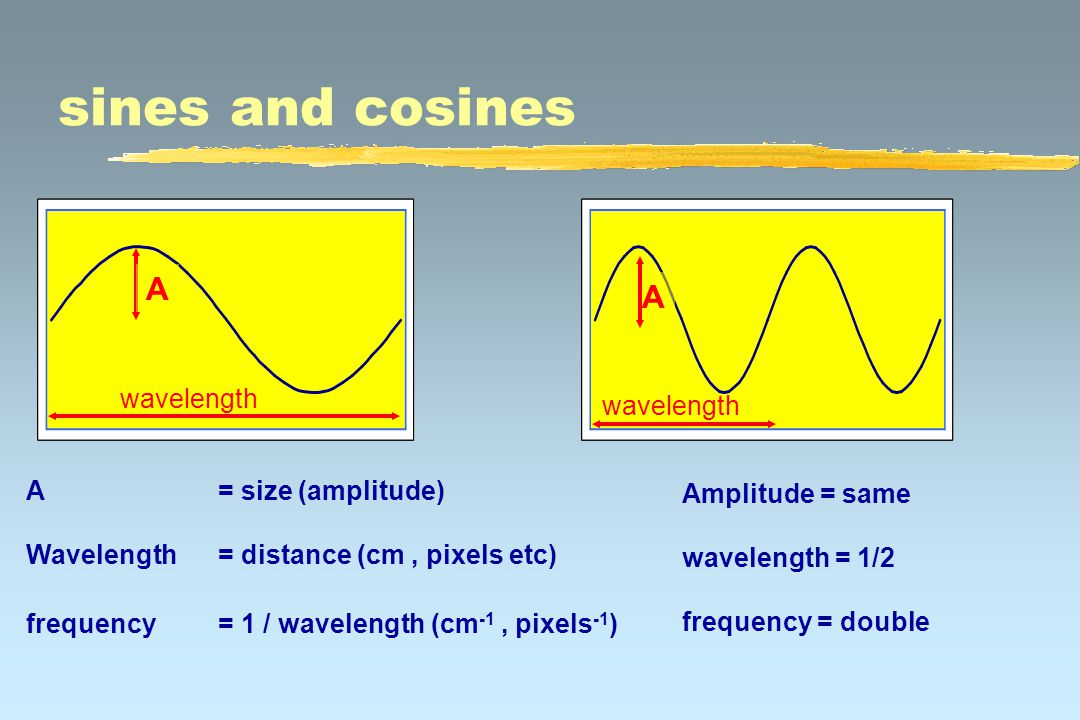 sines and cosines A wavelength A= size (amplitude) Wavelength= distance (cm, pixels etc) frequency = 1 / wavelength (cm -1, pixels -1 ) Amplitude = same wavelength = 1/2 frequency = double A wavelength