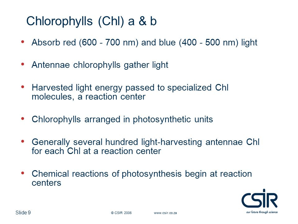 Slide 9 © CSIR 2006 www.csir.co.za Chlorophylls (Chl) a & b Absorb red (600 - 700 nm) and blue (400 - 500 nm) light Antennae chlorophylls gather light Harvested light energy passed to specialized Chl molecules, a reaction center Chlorophylls arranged in photosynthetic units Generally several hundred light-harvesting antennae Chl for each Chl at a reaction center Chemical reactions of photosynthesis begin at reaction centers