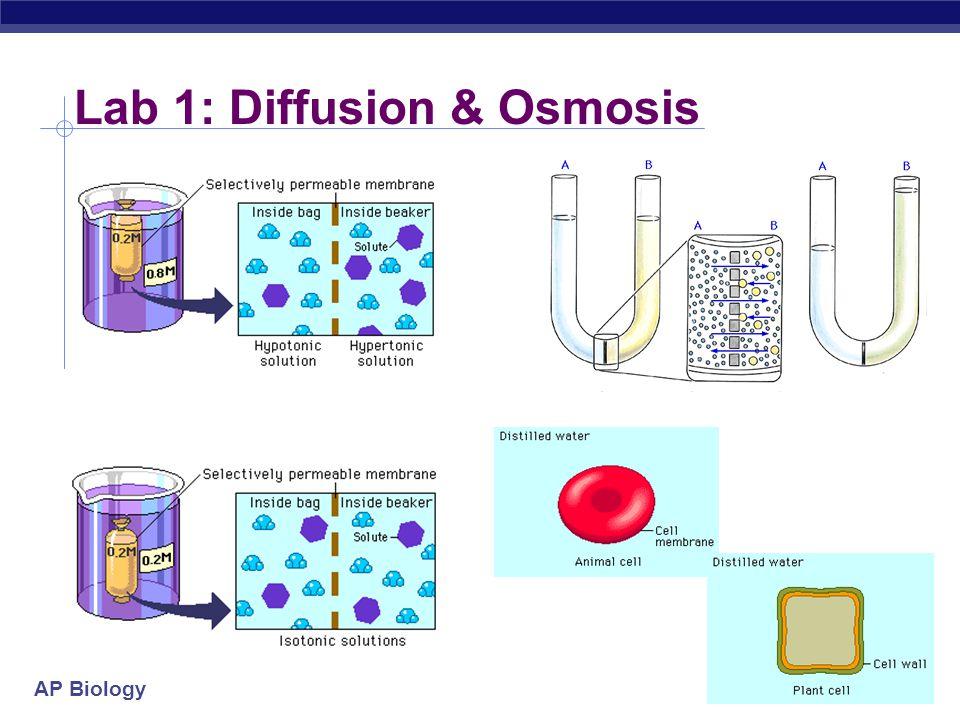 AP Biology 2004-2005 Lab 4: Photosynthesis ESSAY 2004 (part 2) Time (min) Light, Unboiled % transmittance Sample 1 Dark, Unboiled % transmittance Sample 2 Light, Boiled % transmittance Sample 3 028.829.228.8 548.730.129.2 1057.831.229.4 1562.532.428.7 2066.731.828.5