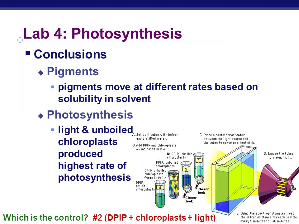 AP Biology 2004-2005 Lab 4: Photosynthesis  Conclusions  Pigments  pigments move at different rates based on solubility in solvent  Photosynthesis