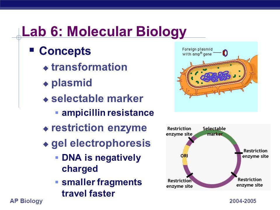 AP Biology 2004-2005 Lab 6: Molecular Biology  Concepts  transformation  plasmid  selectable marker  ampicillin resistance  restriction enzyme 