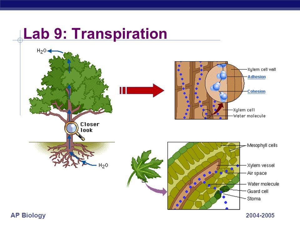 AP Biology 2004-2005 Lab 9: Transpiration
