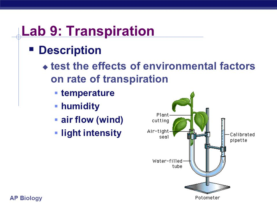 AP Biology 2004-2005 Lab 9: Transpiration  Description  test the effects of environmental factors on rate of transpiration  temperature  humidity