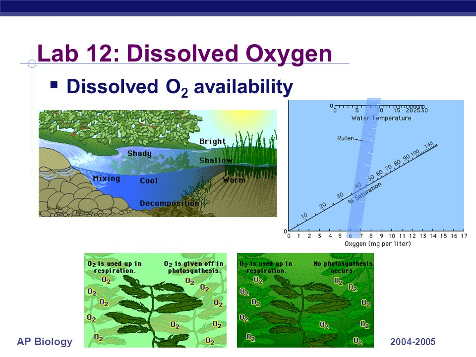 AP Biology 2004-2005 Lab 12: Dissolved Oxygen  Dissolved O 2 availability