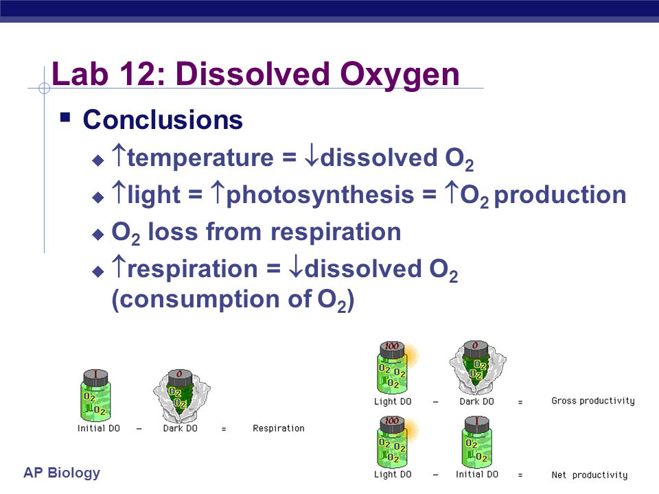 AP Biology 2004-2005 Lab 12: Dissolved Oxygen  Conclusions   temperature =  dissolved O 2   light =  photosynthesis =  O 2 production  O 2 lo