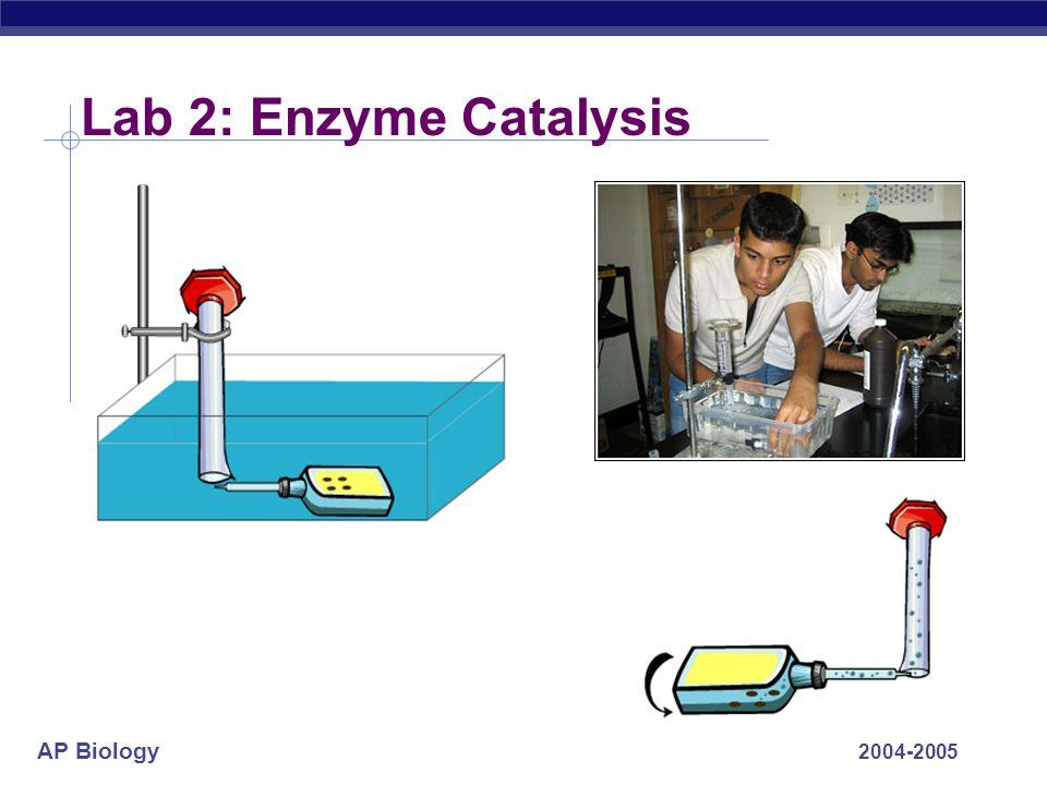 AP Biology 2004-2005 Lab 2: Enzyme Catalysis