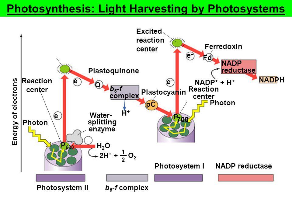 Fig. 10.14 (TEArt) Water- splitting enzyme Photon Ferredoxin Plastoquinone Photosystem II NADP + + H + b 6 -f complex NADP reductase b 6 -f complex Ph