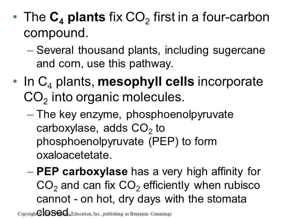 A hypothesis for the existence of photorespiraton (a inexact requirement for CO 2 versus O 2 by rubisco) is that it is evolutionary baggage.