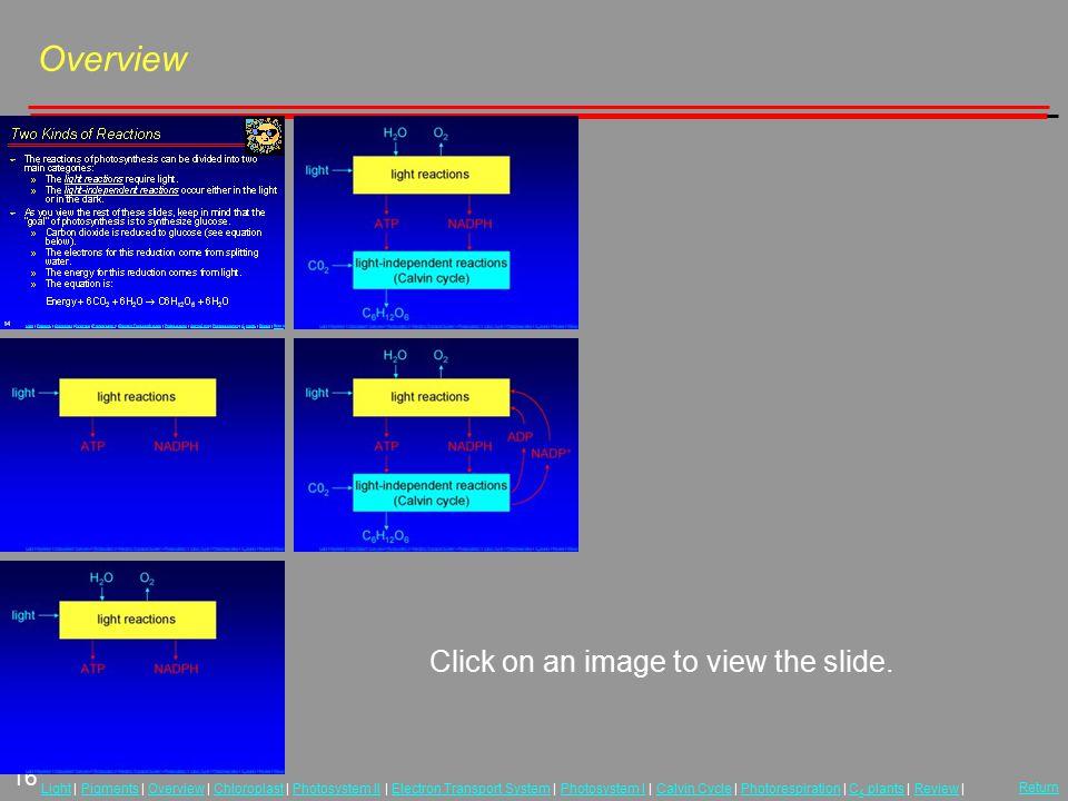 16 LightLight | Pigments | Overview | Chloroplast | Photosystem II | Electron Transport System | Photosystem I | Calvin Cycle | Photorespiration | C 4