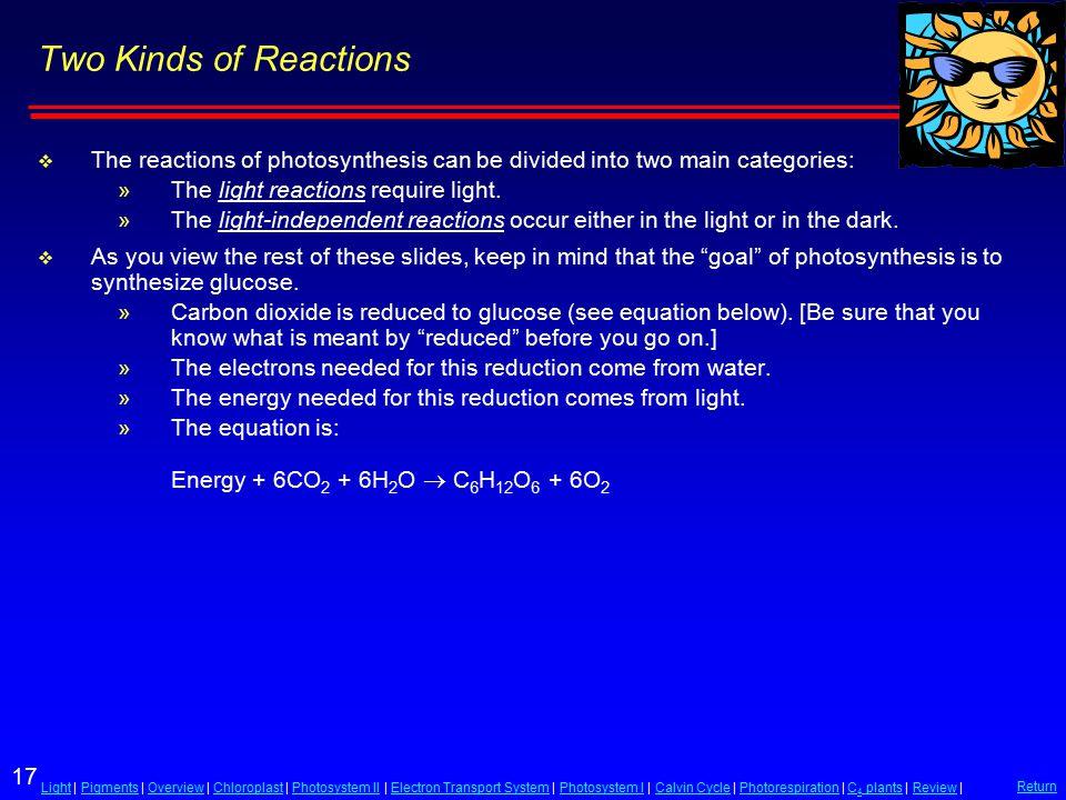 17 LightLight | Pigments | Overview | Chloroplast | Photosystem II | Electron Transport System | Photosystem I | Calvin Cycle | Photorespiration | C 4