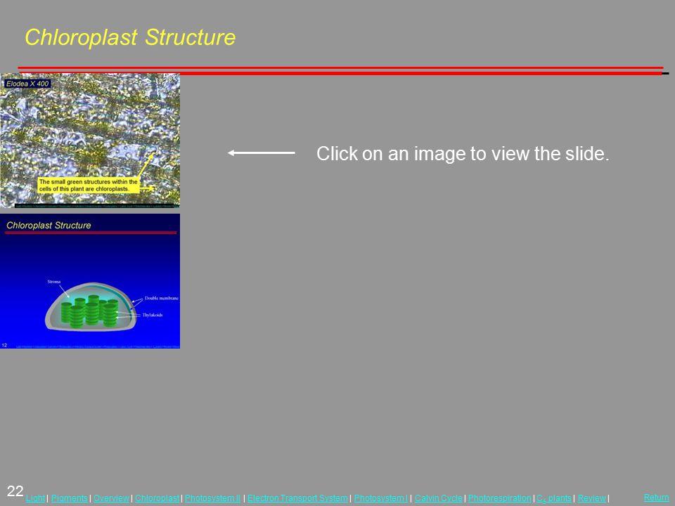 22 LightLight | Pigments | Overview | Chloroplast | Photosystem II | Electron Transport System | Photosystem I | Calvin Cycle | Photorespiration | C 4