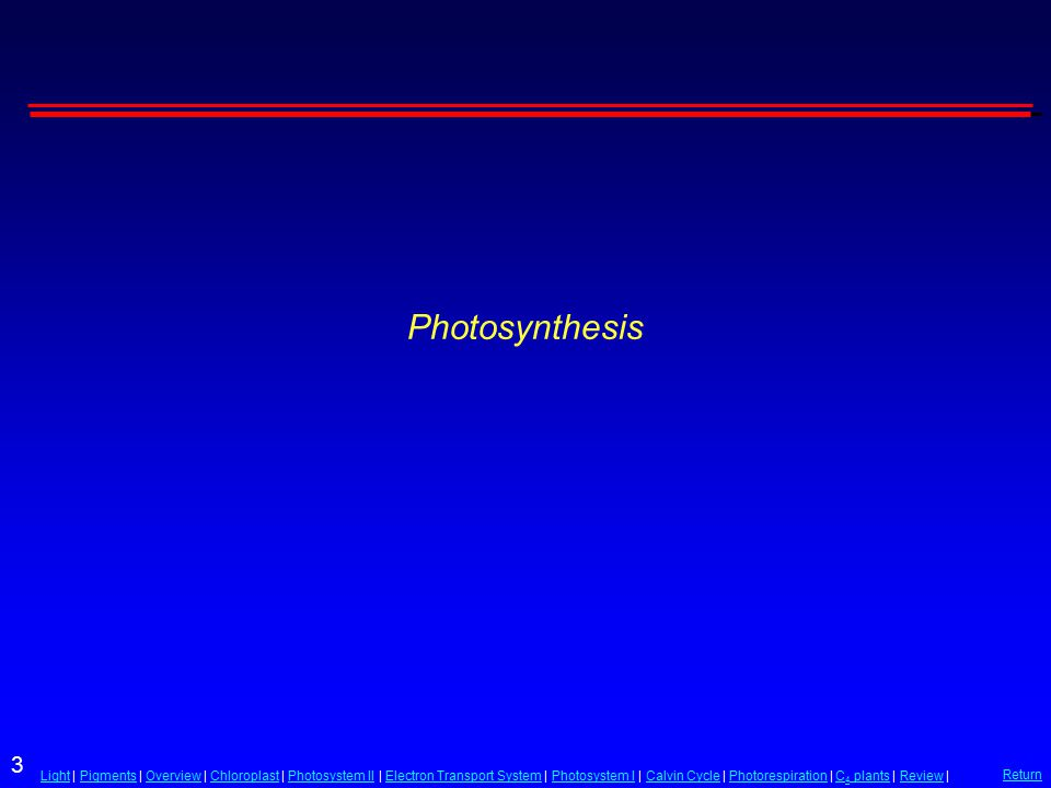 3 LightLight | Pigments | Overview | Chloroplast | Photosystem II | Electron Transport System | Photosystem I | Calvin Cycle | Photorespiration | C 4