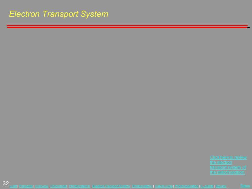 32 LightLight | Pigments | Overview | Chloroplast | Photosystem II | Electron Transport System | Photosystem I | Calvin Cycle | Photorespiration | C 4