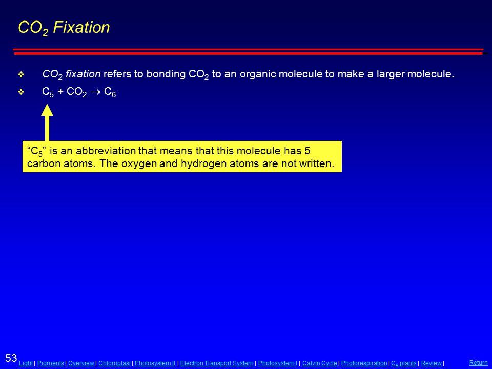 53 LightLight | Pigments | Overview | Chloroplast | Photosystem II | Electron Transport System | Photosystem I | Calvin Cycle | Photorespiration | C 4