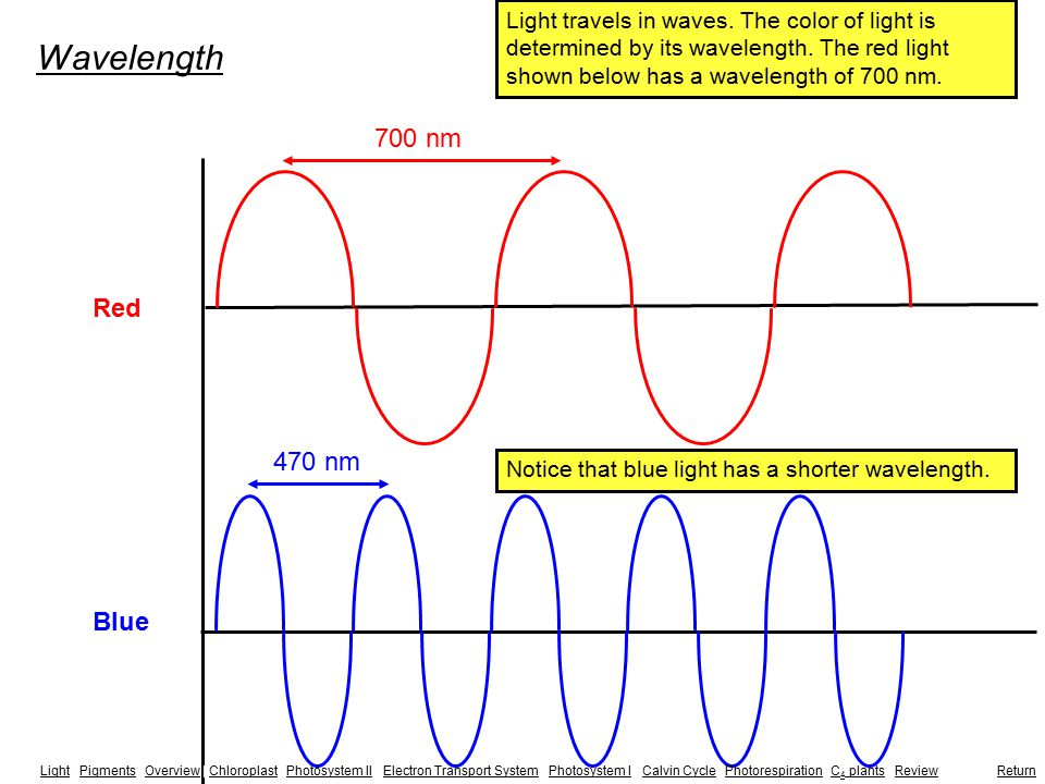 Red Blue Wavelength 700 nm 470 nm Light travels in waves. The color of light is determined by its wavelength. The red light shown below has a waveleng