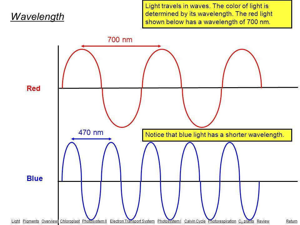 Summary of Oxidative Phosphorylation H+H+ H+H+ H+H+ H+H+ H+H+ H+H+ H+H+ H+H+ H+H+ H+H+ NADH H+H+ H+H+ H+H+ 2H + + 2e - + 1/2 O 2  H 2 O ADP + P i H+ ATP LightLight | Pigments | Overview | Chloroplast | Photosystem II | Electron Transport System | Photosystem I | Calvin Cycle | Photorespiration | C 4 plants | Review |PigmentsOverviewChloroplastPhotosystem IIElectron Transport SystemPhotosystem ICalvin CyclePhotorespirationC 4 plantsReview Return