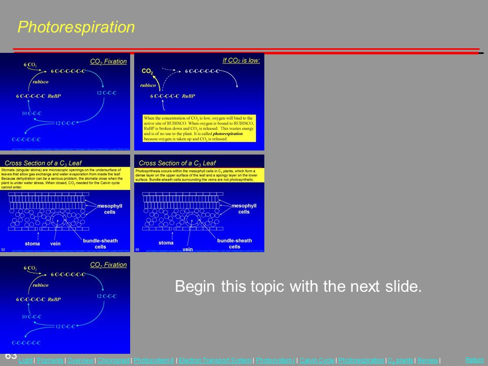 63 LightLight | Pigments | Overview | Chloroplast | Photosystem II | Electron Transport System | Photosystem I | Calvin Cycle | Photorespiration | C 4