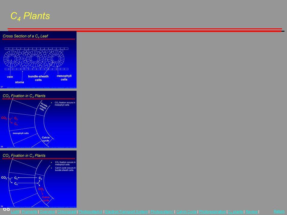 68 LightLight | Pigments | Overview | Chloroplast | Photosystem II | Electron Transport System | Photosystem I | Calvin Cycle | Photorespiration | C 4