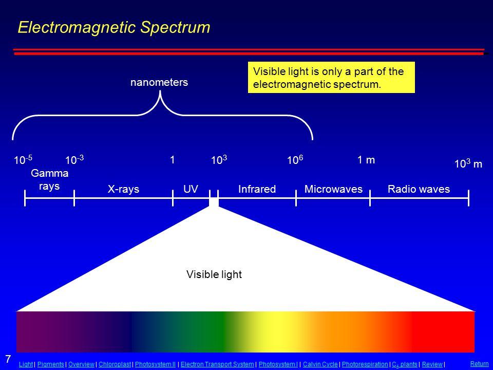 Reaction Center, Electron Acceptor Thylakoid membrane A pigment molecule within the antenna absorbs a photon of light energy.
