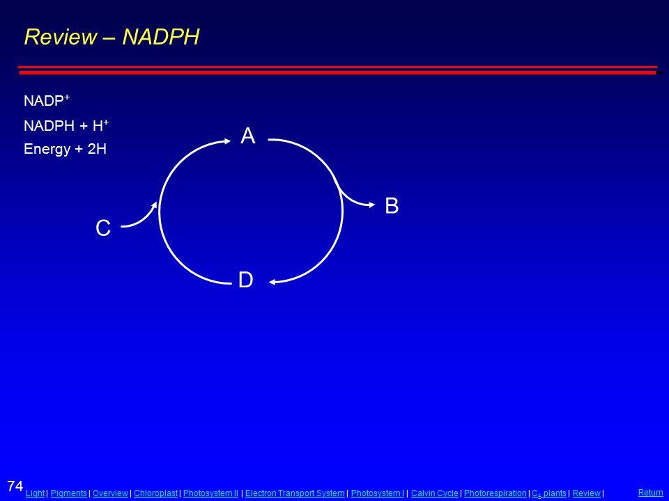 74 LightLight | Pigments | Overview | Chloroplast | Photosystem II | Electron Transport System | Photosystem I | Calvin Cycle | Photorespiration | C 4