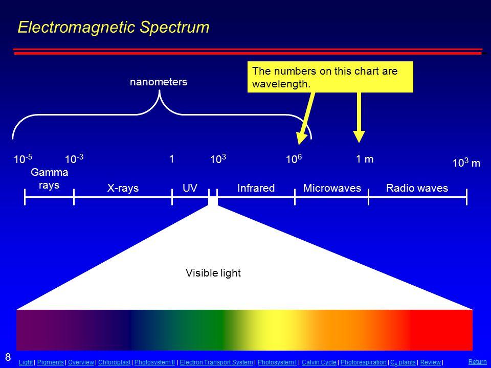 8 LightLight | Pigments | Overview | Chloroplast | Photosystem II | Electron Transport System | Photosystem I | Calvin Cycle | Photorespiration | C 4