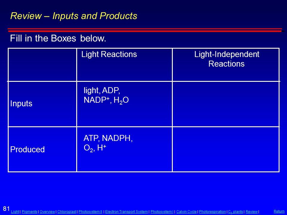 81 LightLight | Pigments | Overview | Chloroplast | Photosystem II | Electron Transport System | Photosystem I | Calvin Cycle | Photorespiration | C 4