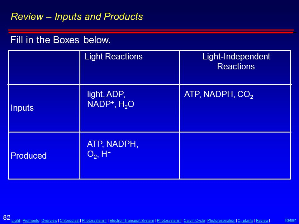 82 LightLight | Pigments | Overview | Chloroplast | Photosystem II | Electron Transport System | Photosystem I | Calvin Cycle | Photorespiration | C 4