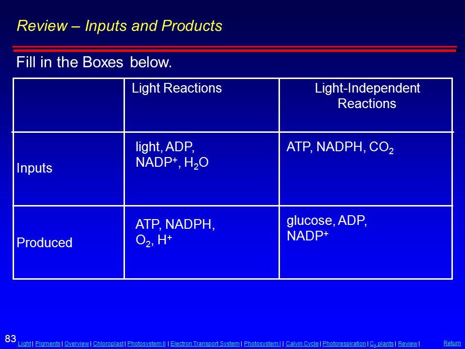 83 LightLight | Pigments | Overview | Chloroplast | Photosystem II | Electron Transport System | Photosystem I | Calvin Cycle | Photorespiration | C 4