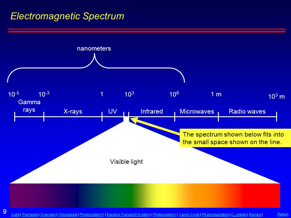 9 LightLight | Pigments | Overview | Chloroplast | Photosystem II | Electron Transport System | Photosystem I | Calvin Cycle | Photorespiration | C 4