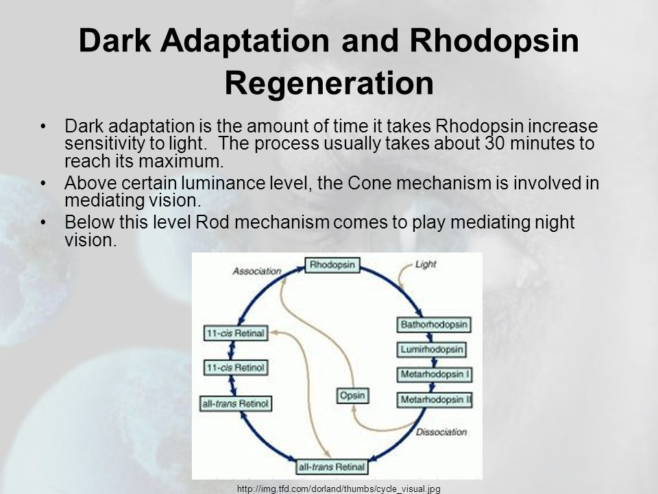 Dark Adaptation and Rhodopsin Regeneration Dark adaptation is the amount of time it takes Rhodopsin increase sensitivity to light.